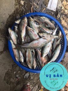đặc sản cá mát nghệ an